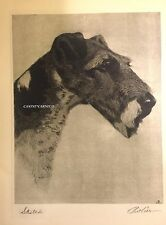 Dog Print 1931 The Wire Haired Champion Terrier Sketch by Bert Cobb