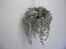 Hänger Rankpflanze Hängepflanze Kunstpflanze Schnee Frost 104716-00 F37