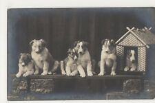 Dogs, Rotary A.717 Real Photo Postcard, B359