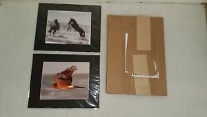 2x Signed Matted Photo Prints Horses & Harrier