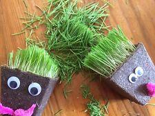Kids Grass Heads Organic Wheatgrass Grow Kit