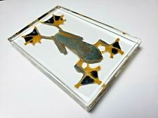 RHACOPHORUS REINWARDTII. JAPAN FLYING FROG immortalized in clear resin.