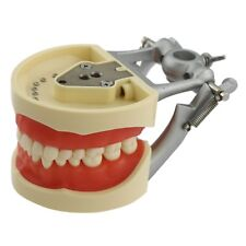Kilgore Nissin 200 Compatible Dental Typodont Model with Removable Teeth #8012