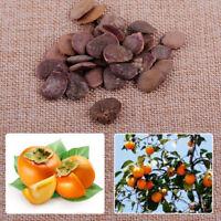 30x Brown Heirloom Plant Sweet Fruit Diospyros Kaki Tree Persimmon Seeds 0.8inch