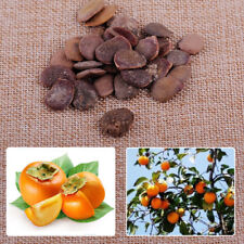 30x Brown Heirloom Plant Sweet Fruit Diospyros Kaki Tree Persimmon Seeds 0.8inch