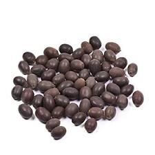 Lotus Seed / Kamal Gatta Loose Beads / Meditation /wholesale loose beads 108+1