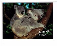 Postcard: Mother and baby Northern Koala, Australia