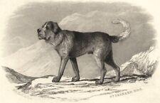 DOGS. St. Bernard Dog. St. Bernard Dog (Edward Jesse) 1888 old antique print