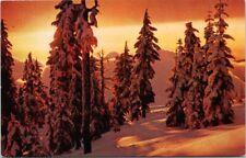 Sunset Winter Landscape Trees Snow UNUSED Vintage Postcard D97