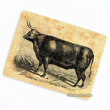Bull Deco Magnet, Decorative Fridge Vintage Farm Animal Illustration Ox Gift