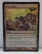 Wizard Game Gioco MTG Magic Carta Spirale Temporale Swarmyard - BRULICAMPO FOIL