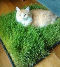 CAT GRASS SEEDS GROW YOUR OWN HAPPY KITTY DIGESTION HEALTH & READY GROWN CATNIP