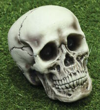 Life Sized Halloween Skull Prop Foam 21cm Bone Skeleton