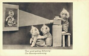 Funny Kittens With a Beamer Cat Postcard B44