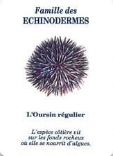 Carte à Jouer Echinoidea Oursin Hérissons de mer Sea urchin Seeigel