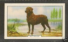 1938 UK Dog Art Full Body Study Gallaher Second Series Cigarette Card ROTTWEILER
