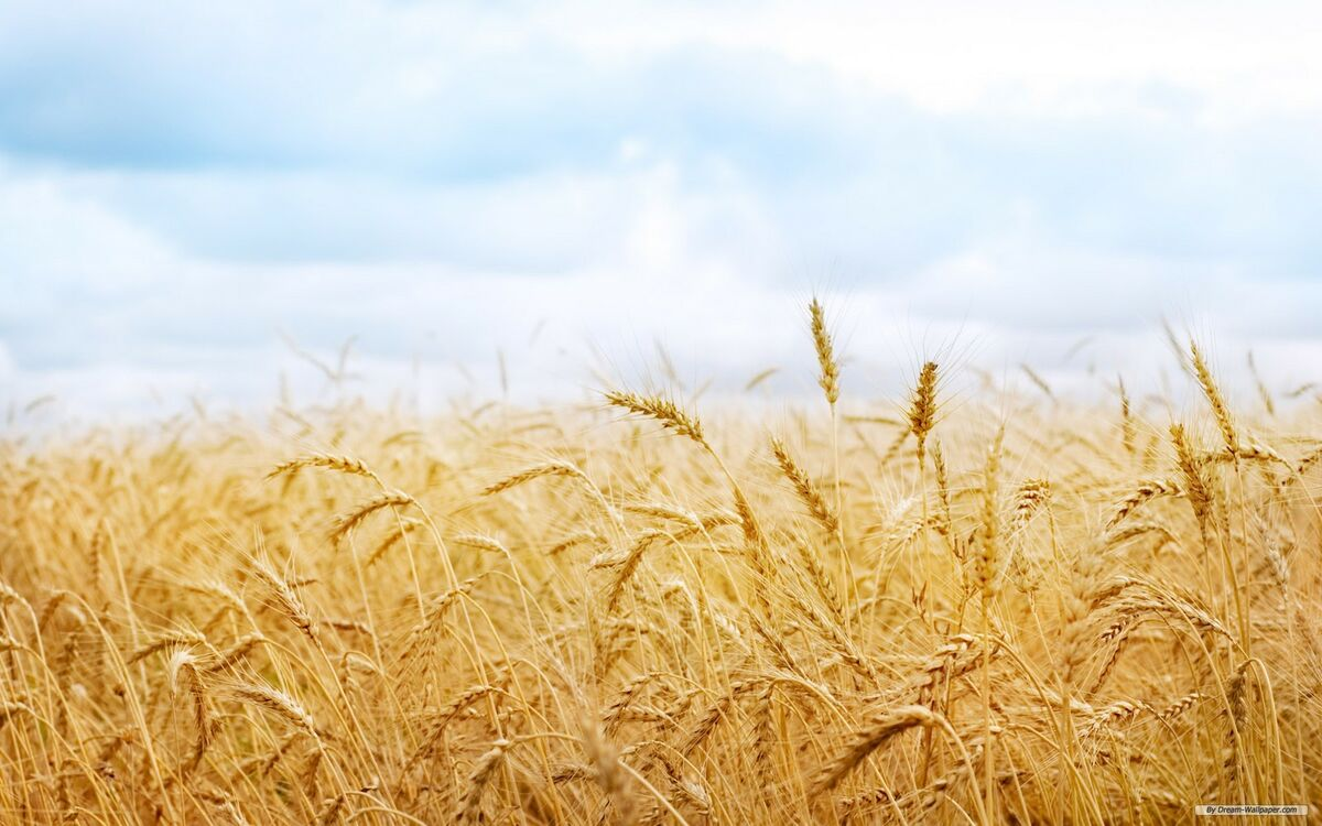 Ruth and Naomi's Gleanings