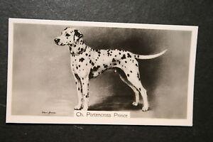 DALMATIAN     Champion  1930's Vintage Photo Card  VGC