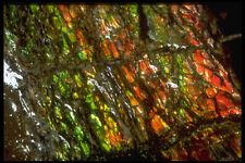 413009 Ammolite Canada A4 Photo Texture Print