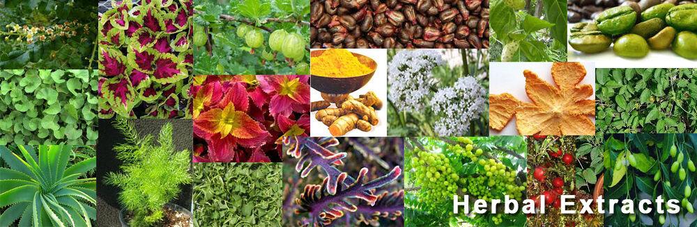 Natural.Bulk.Herbal.Extract