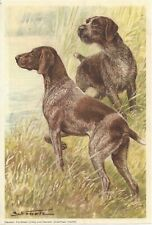 1960 Scholz Berlin Morning News Dog Art German Shorthaired Wirehaired Pointer