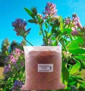 Luzerne Ewiger Klee Gründüngung Frische Saat 500 g Samen