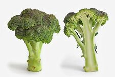 750 Seeds of CABBAGE BROCCOLI Green Calabrese Vegetable garden Vegetables Plants