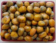 Wholesale Lots Bumble Bee Jasper Tumbled Stone Healing Crystal Origin Indonesia