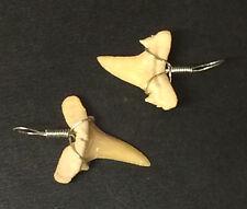 X2 Colgante  Diente Fósil De Tiburón