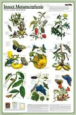 INSECT METAMORPHOSIS ~ 24x36 NATURE POSTER ~ Science Evolution