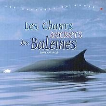 Le Chants Secrets Des Baleines de Christian Gence | CD | état acceptable