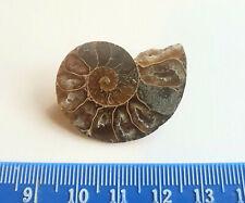 Madagascan Fossil Ammonit Scheibe Brosche - Rich Brown -3.4cm