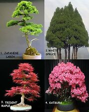 Huge Bonsai Pack 12 Types oF Trees Over 110+ Seeds ! Rare + Growing Instruction