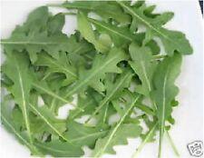 Salad - Wild Rocket - 7000 Seeds