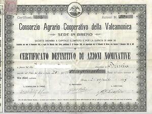 CERTIFICATO AZIONARIO CONSORZIO AGRARIO COOPERATIVO DELLA VALCAMONICA BRENO 1909