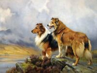 Best Gift Home Wall Decor Collie Dogs Over The Lake Painting Printed On Canvas