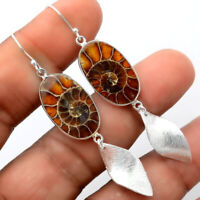 Fossil Ammonite - Madagascar 925 Sterling Silver Earrings Jewelry AE30133