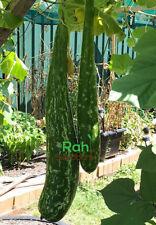 Gourd Sweet Green - Sweet & Tasty Long Melon Calabash, Lauki Variety - 5 Seeds