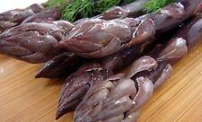 Pacific Purple Asparagus 25 Roots - The Best Purple Asparagus - No GMOs