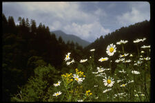 603069 Flowers At The Top Adirondack National Park New York A4 Photo Print