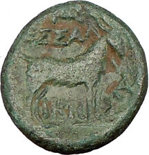 THESSALONICA Macedonia 148BC Authentic Ancient Greek Coin DIONYSUS & GOAT i23143