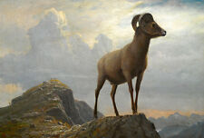 Study of a Bighorn Ram 75cm x 51cm by Albert Bierstadt High Quality Canvas Print
