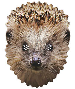 Hedgehog Animal 2D Single Card Party Mask - World Book Day Wildlife Countryside
