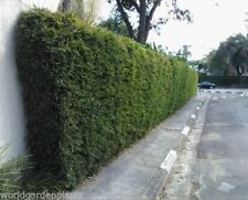 Shrubs & Hedges