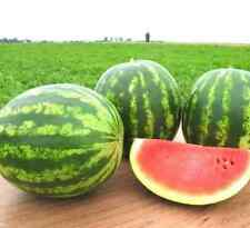 Watermelon Kherson Seeds organic seeds non-GMO seeds Ukraine 3 g Farmer's dream