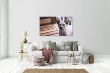 Wandtattoo Wandsticker Aufkleber Katze Sphynx Grösse: 120 x 70 cm