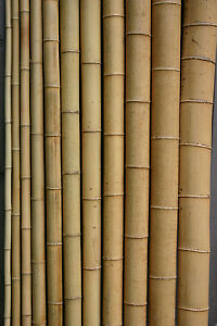 Bambusrohr  3-4 cm 1m Bambusrohre Bambusstange Bambusstangen Bambus