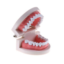 children Education oral teeth toy Dental tooth model Early  teaching model
