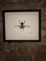 Rhino Beetle, Signed Original Watercolour Painting, Art Not A Print, Gift