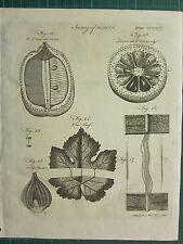 1797 GEORGIAN PRINT ~ BOTANY ANATOMY OF PLANTS LEMON VINE LEAF TULIP ROOT
